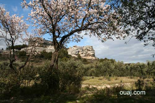 Photo des alpilles baux de provence